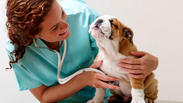 Коронавирус у собак: симптомы и лечение инфекции, передается ли человеку