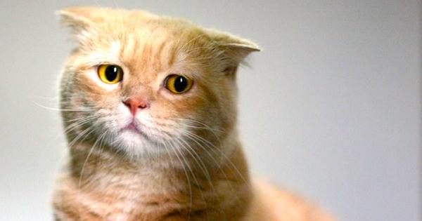 Короновирусная инфекция у кошек: симптомы, как передается и лечение кошачьего коронавируса
